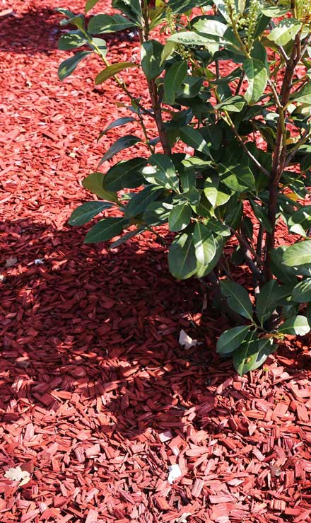 Beautiful Finish Landscaping Inc. Mulching